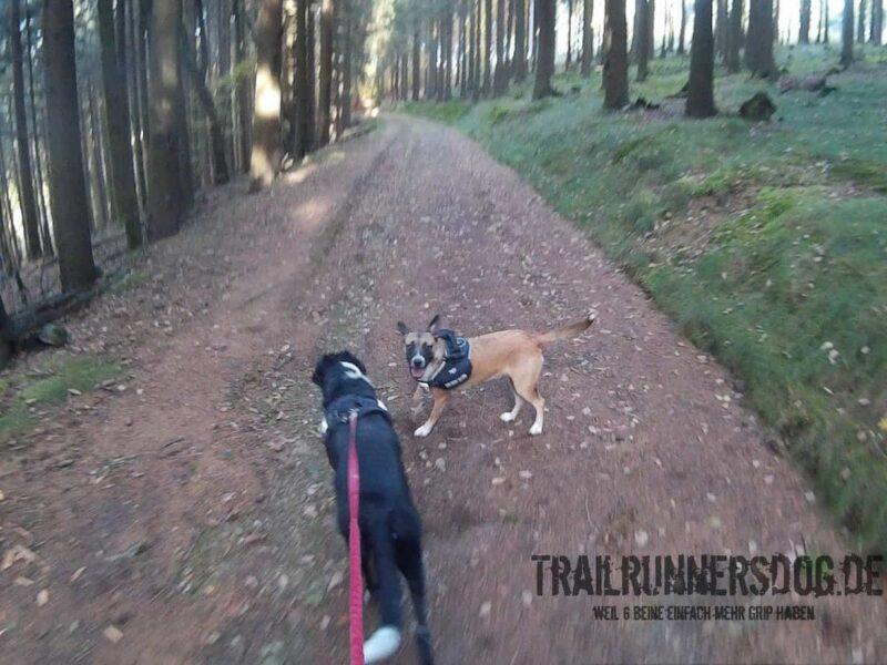 Laufen mit Hund im Wald